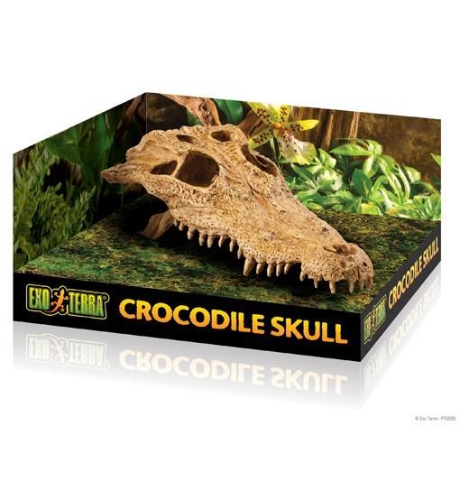 Exo-Terra Czaszka Krokodyla Crocodile Skull (PT2856)