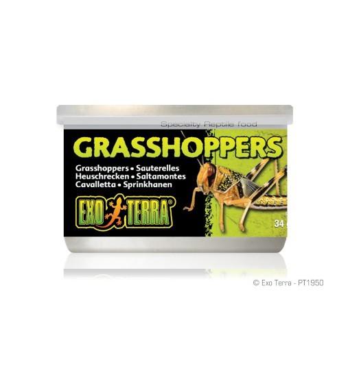 Exo-Terra Pokarm w puszce - konik polny Grasshoppers