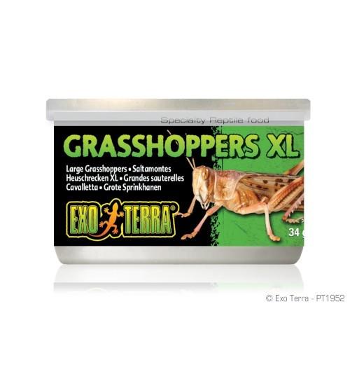 Exo-Terra Pokarm w puszce - konik polny XL Grasshoppers XL