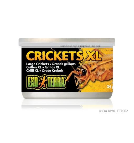 Exo-Terra Pokarm w puszce - świerszcze XL Crickets XL