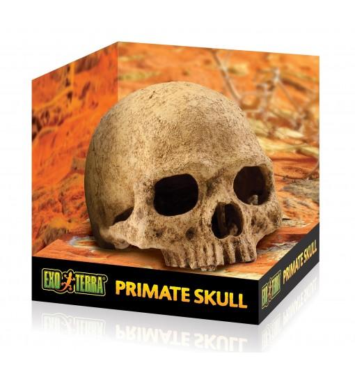 Exo-Terra Czaszka Ludzka Primate Skull (PT2855)