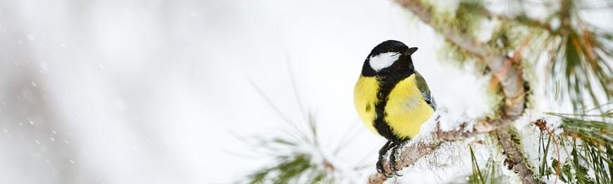 Ptaki zimujące