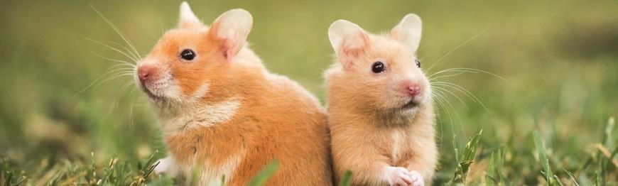 Małe zwierzęta