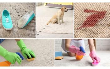Środki czystości przyjazne dla zwierząt. Co wybrać?