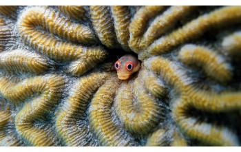 Dlaczego rybom potrzebne są kryjówki?