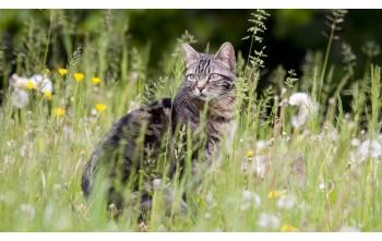 Waleriana, czyli to co koty lubią najbardziej