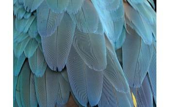 Dlaczego ptaki wyrywają pióra ?