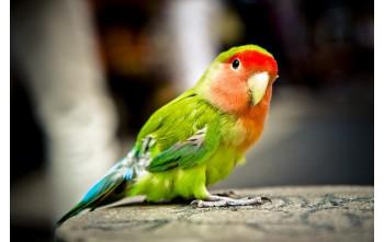 Cała prawda o piasku dla ptaków
