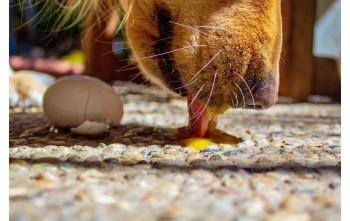 Toksyczne dla psów popularne produkty spożywcze
