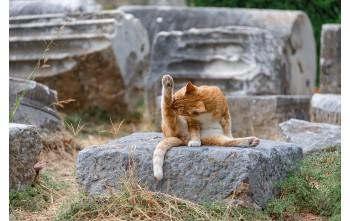 Jak wykąpać kota bez wody?