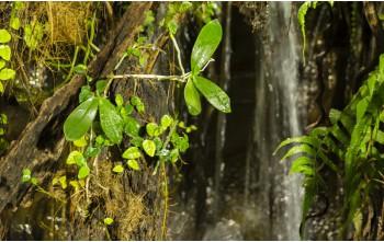 Jak utrzymać wilgotność w terrarium tropikalnym