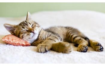 Dlaczego koty tak długo śpią?